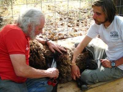 sustainable animal husbandry at windward