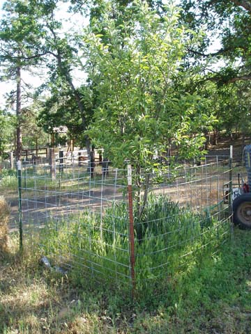 Refencing the Fruit Trees
