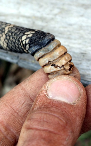 Rattle Snake Country or how it pays to keep your head in the